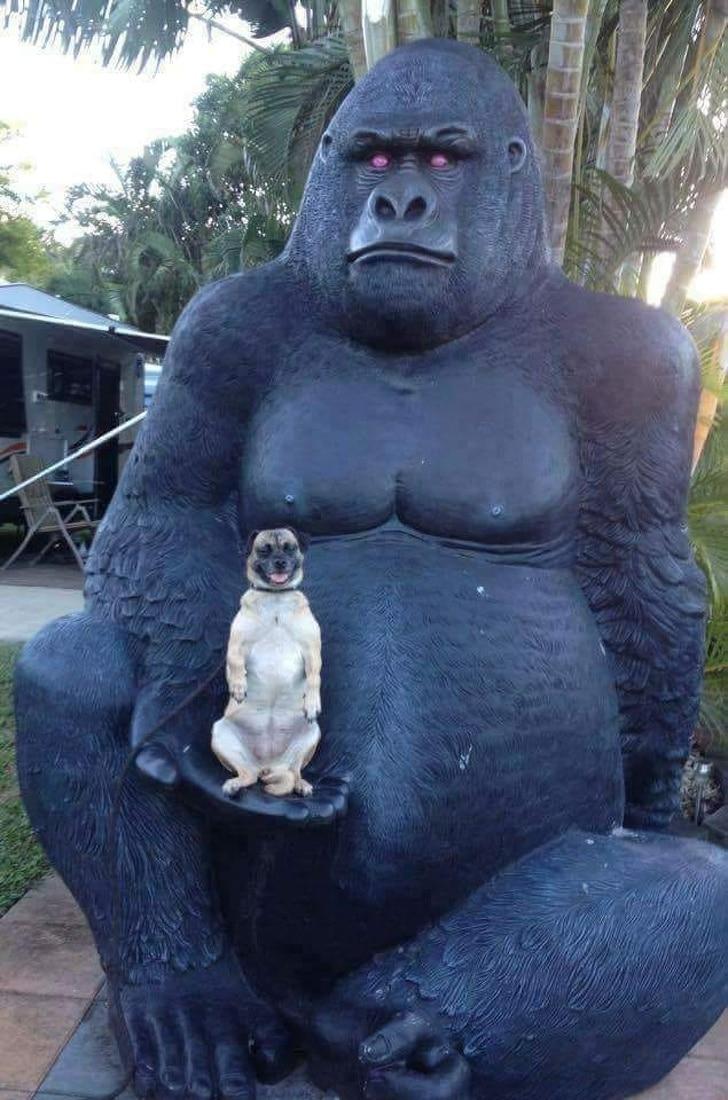 фото животных, фото животных смешные рис 7