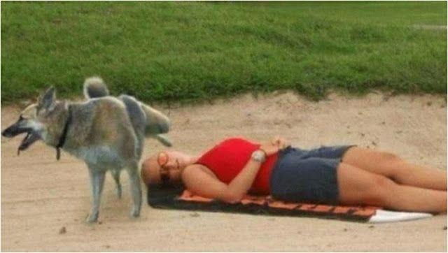 собака задрала лапу над девушкой
