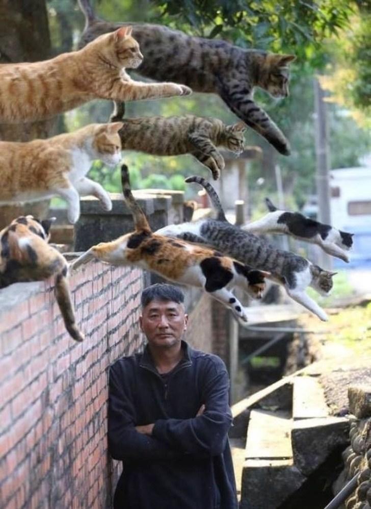 мужчина и кошки