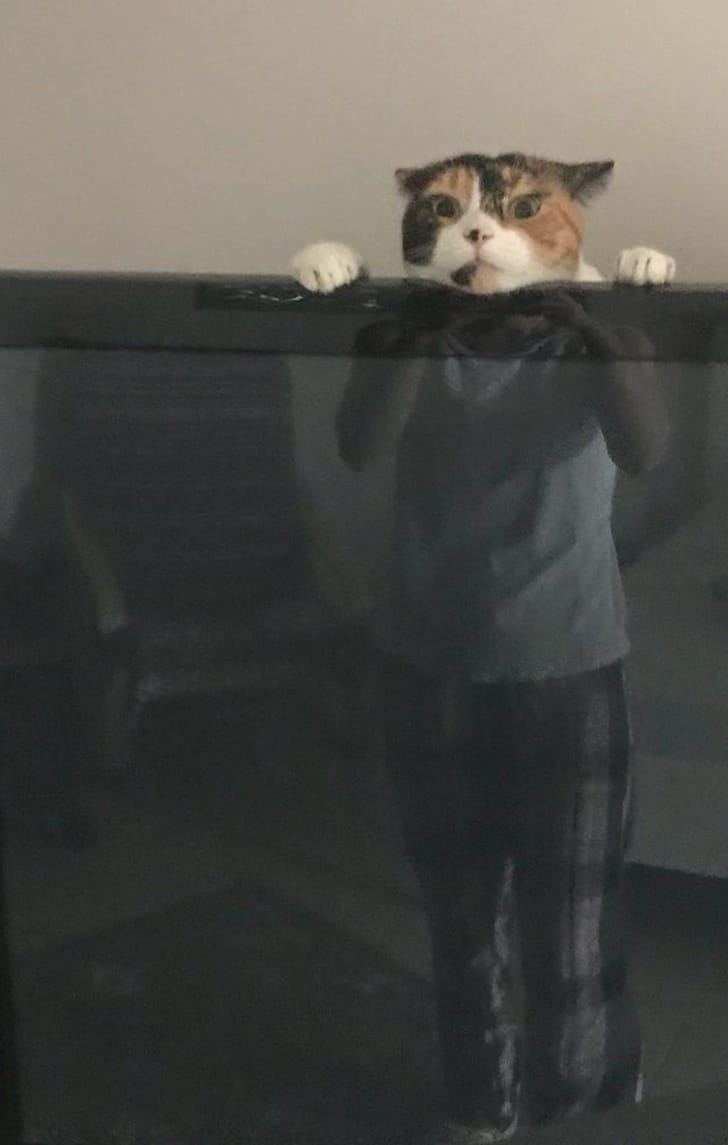 фото с котом
