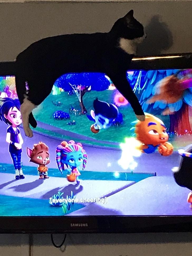 черный кот на телевизоре