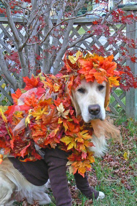 собака в листьях украшена