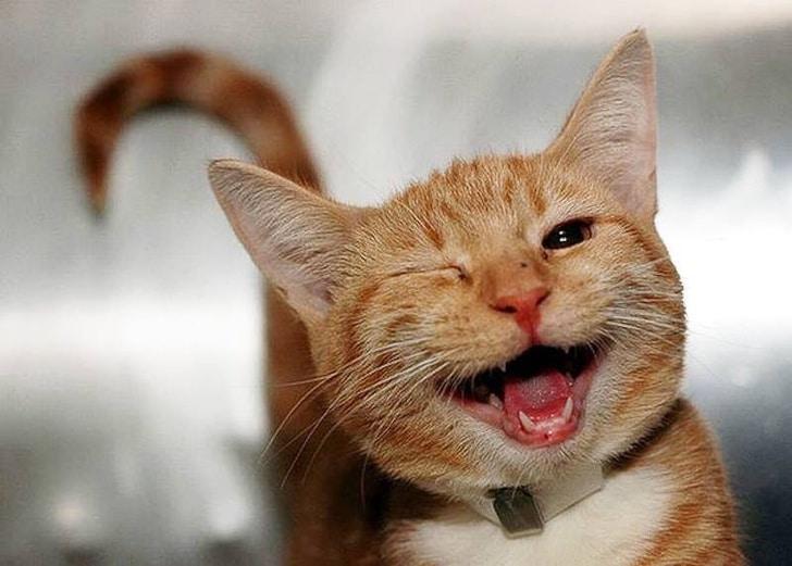 фото животных, фото животных смешные рис 9