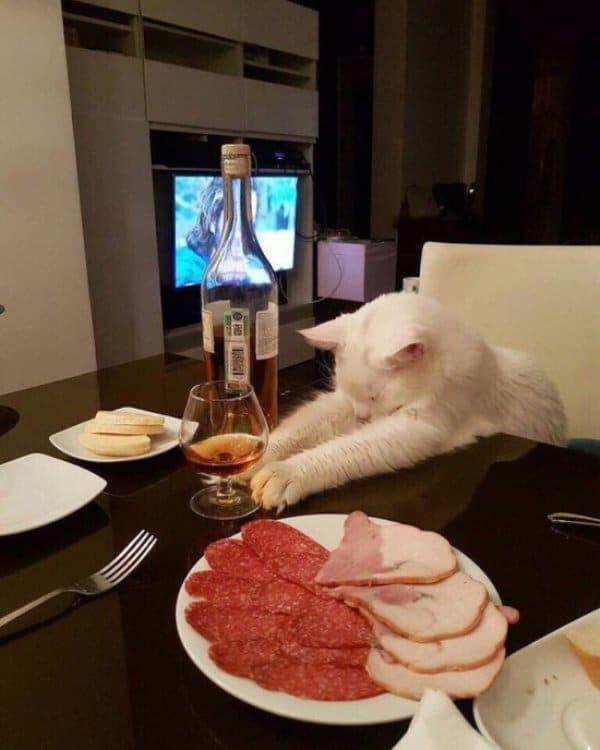 белый кот тянется за бокалом