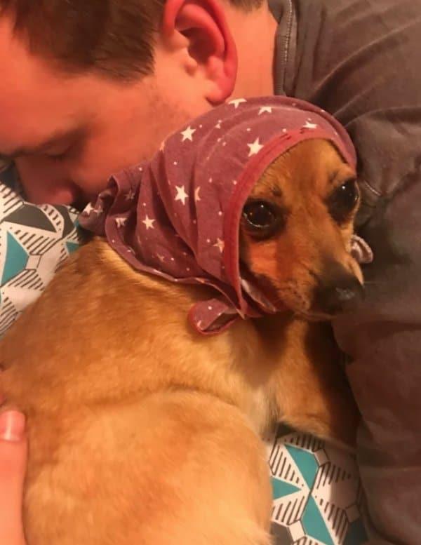 рыжая собака в платке