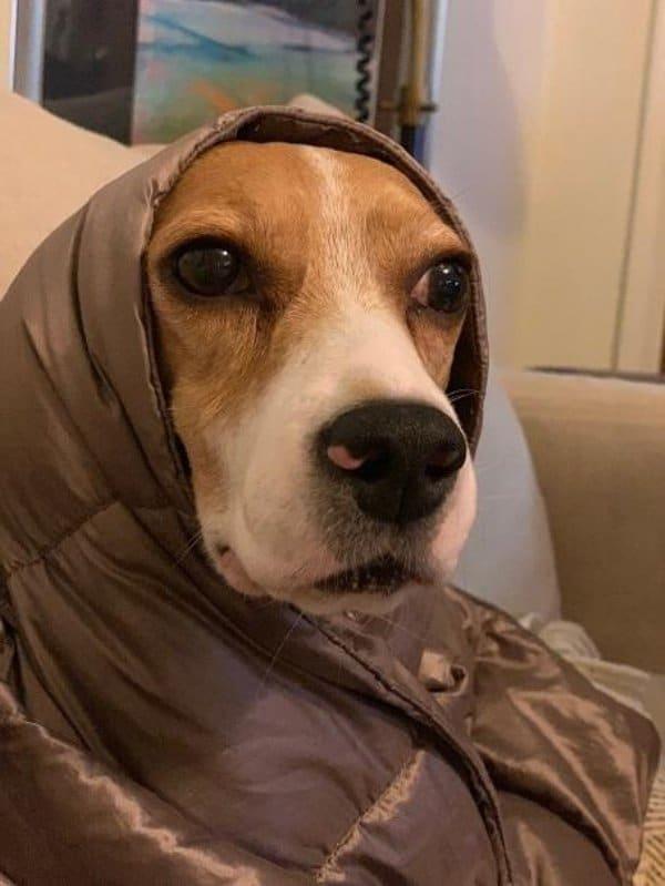 собака в куртке