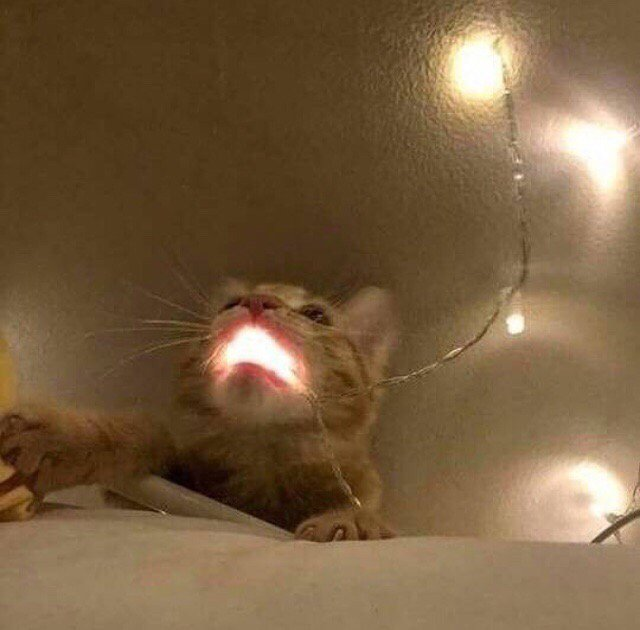 рыжий кот с гирляндой во рту