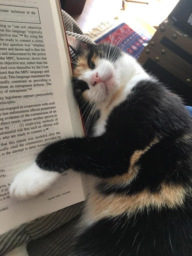 кошка и книга