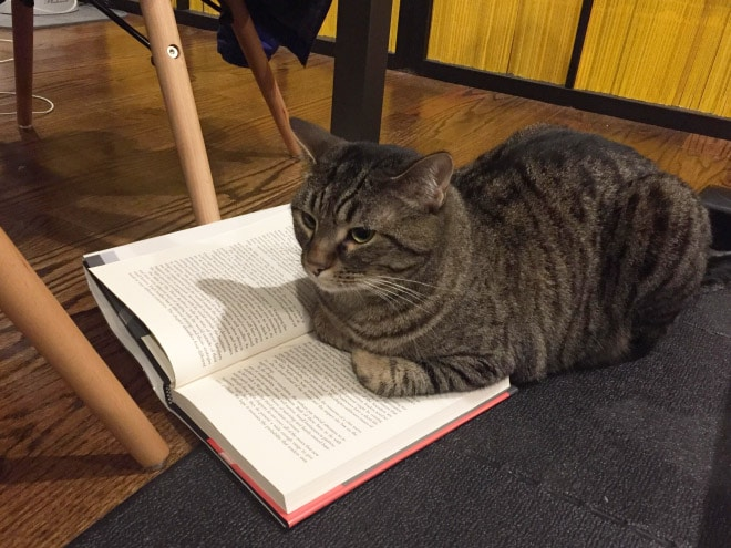 суровый кот лежит на книге