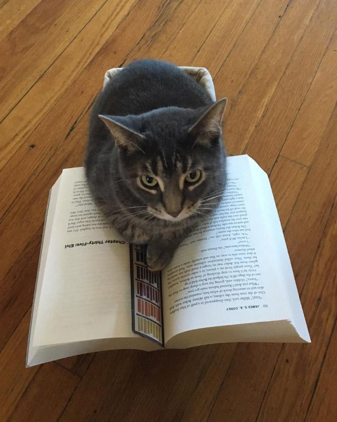серый кот и книга
