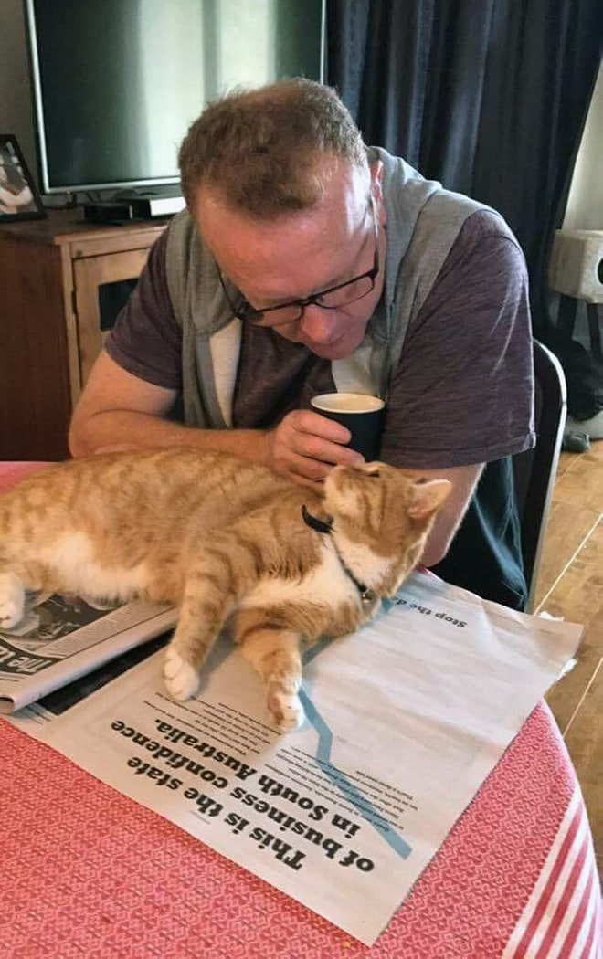 кот лежит на газете