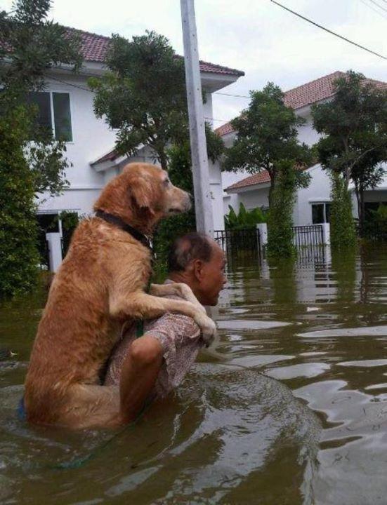 мужчина несет на руках собаку