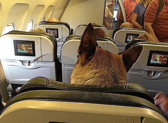 Весельчаки! 10 забавных случаев, произошедших на борту самолета... Часть 2 рис 4