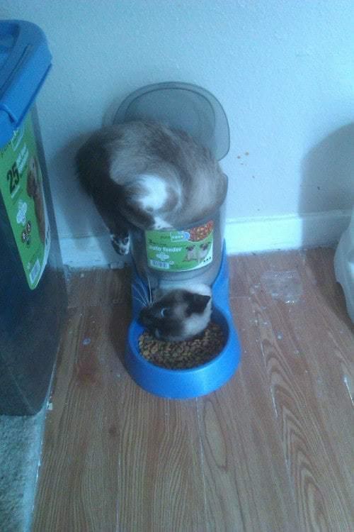 кот и еда