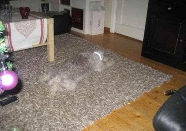 собака спит на ковре