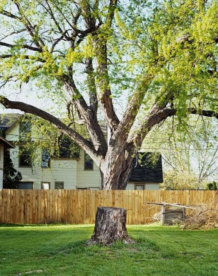 дерево за забором