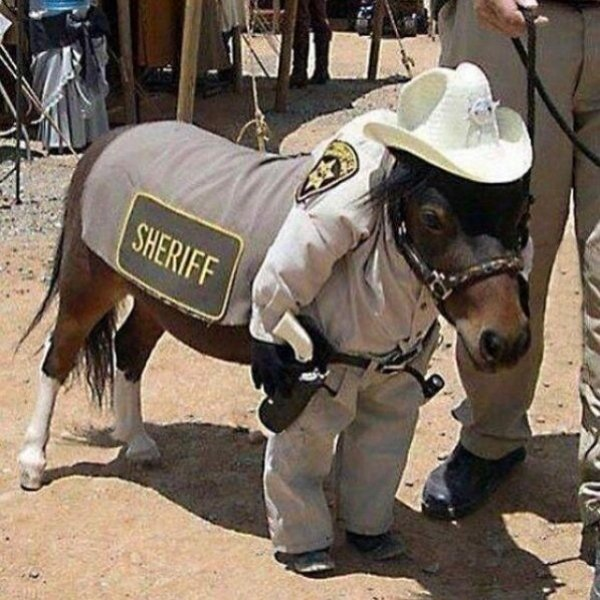 пони в костюме шерифа