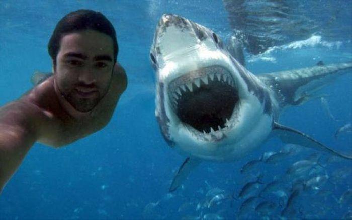 мужчина и акула