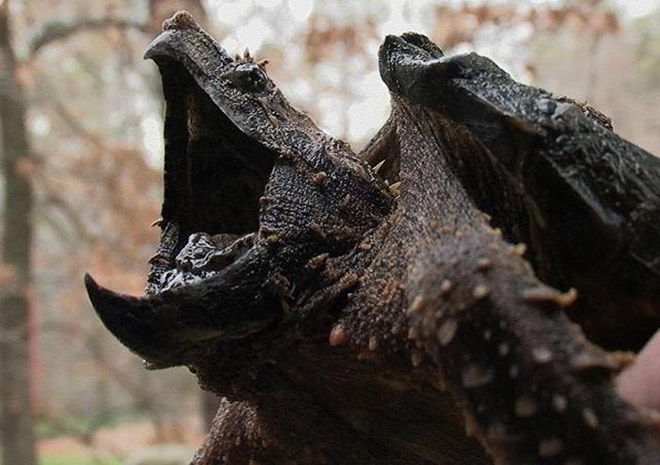 фото черепахи