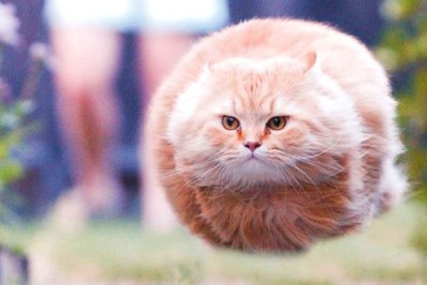 рыжий кот летит по воздуху