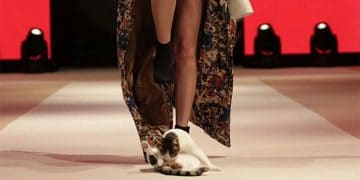 model-cat-on-the-runway