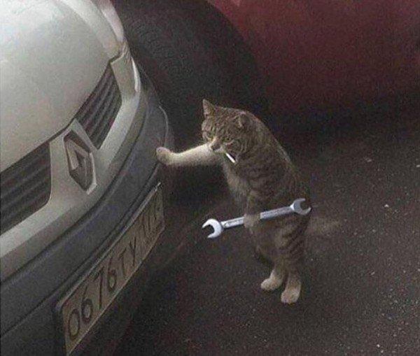 кот с гаечным ключом у машины