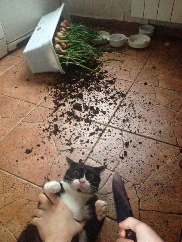 кот перевернул горшок с луком