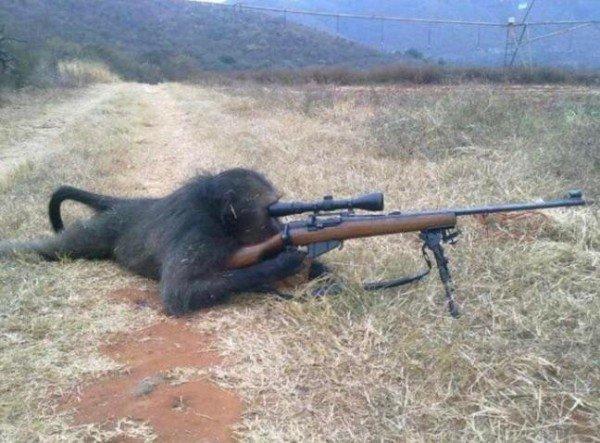 шимпанзе с винтовкой