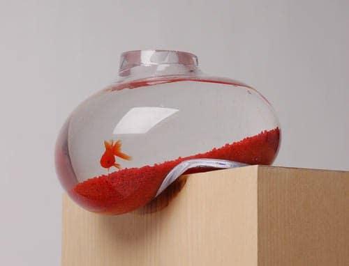 необычный аквариум с рыбкой