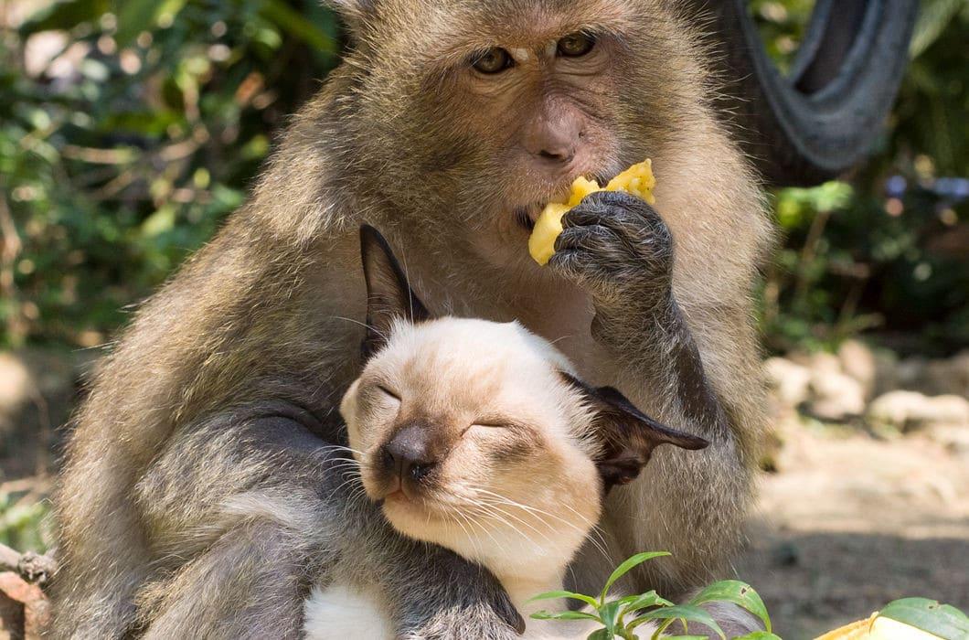 дружба кота и обезьяны