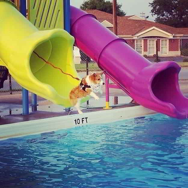 собака на водной горке