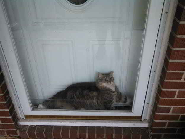 кот за стеклом