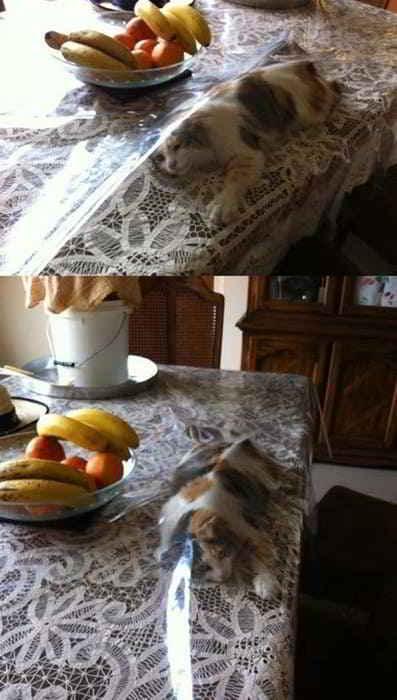 кот под скатертью на столе