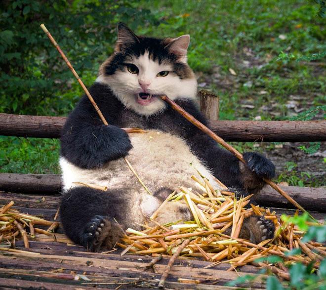 панда и кот