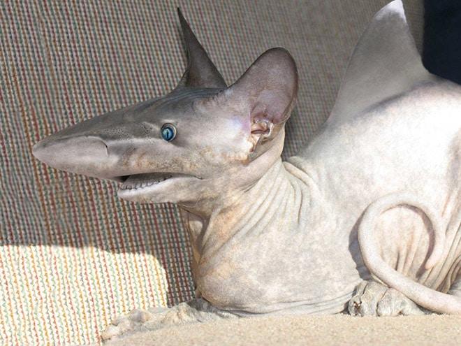 кот и акула