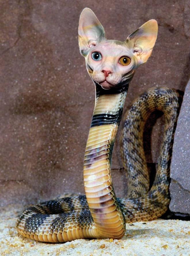 змея и кот