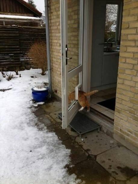 кот и дверь