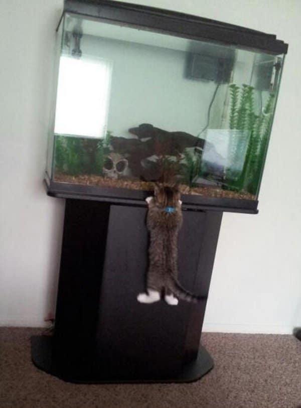 кот висит на аквариуме