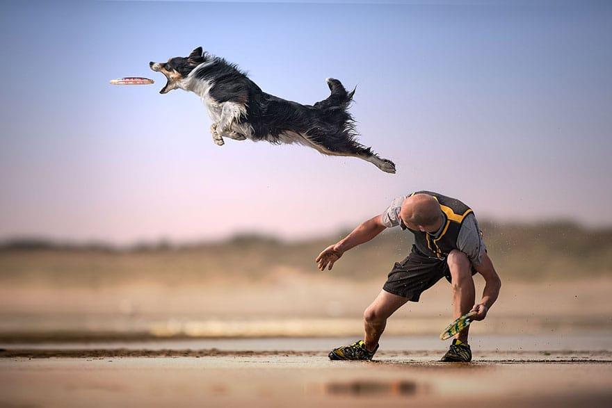 собака ловит тарелку брошенную мужчиной