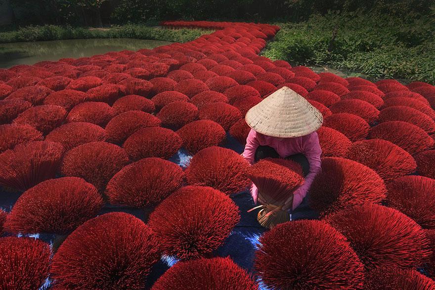 человек вьетнамец собирает красные растения