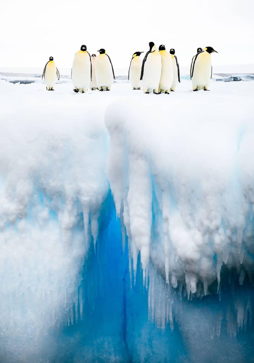 пингвины стоят на огромном айсберге