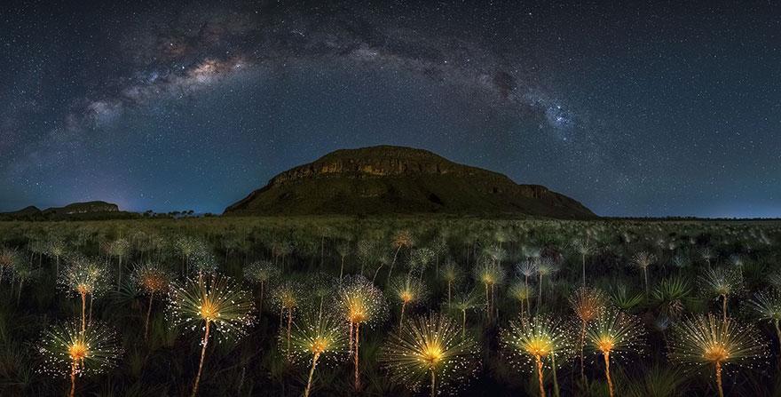 гора, звезды и светящиеся одуванчики