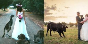 свадьба и животные777