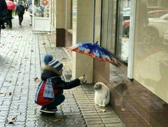 ребенок укрывает от дождя кота