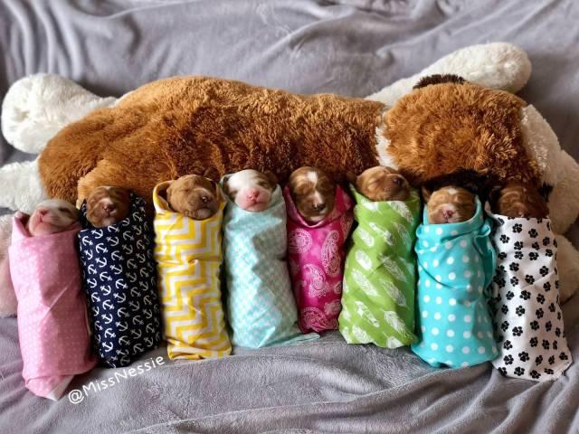 крошечные щенята