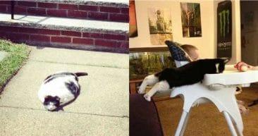10 юморных фотографий, в которых показана вся суть котов!