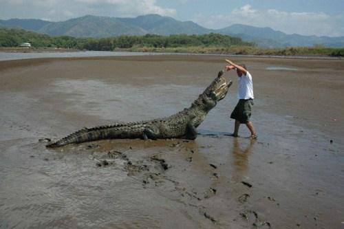 мужчина и аллигатор