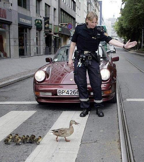 полицейский и утки