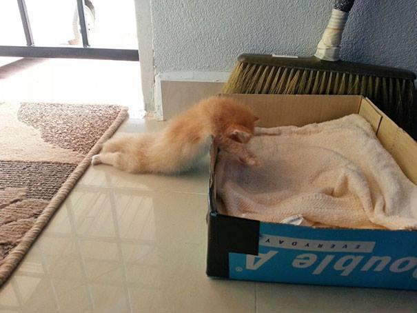 10 фото, которые доказывают, что кошки - самые смешные существа на Земле! Часть 2 рис 8