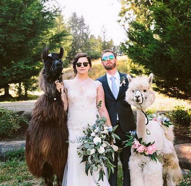 невеста и жених держат возле себя лам